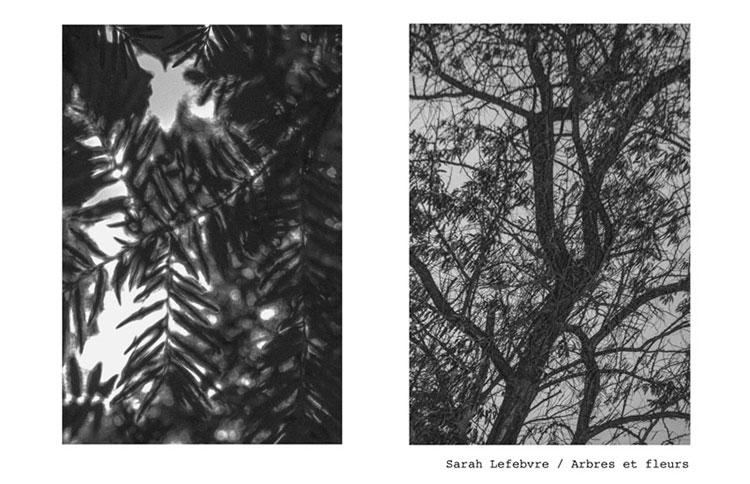 10-3-Sarah-Lefebvre-arbres-fleurs