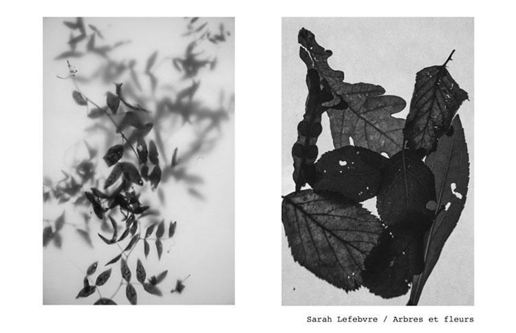 10-5-Sarah-Lefebvre-arbres-fleurs