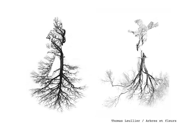 32-6-Thomas-Leullier-arbres-fleurs