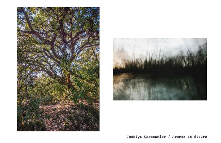 39-Jocelyn-Carbonnier-arbres-fleurs
